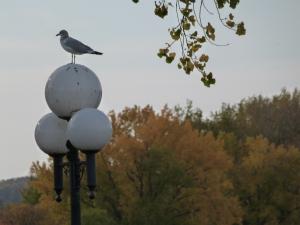 bird on lamp