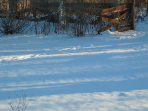 Shadows on snow are so . . . restful