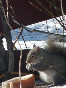squirrel w nut