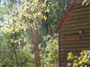 cabin nice