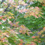 fall colors 8.15