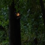 2012 July lantern
