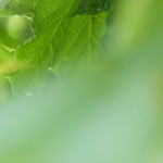 rain blur clearer