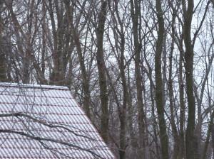 cabin winter trees