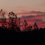 sunrise pink