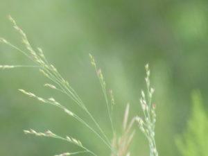 delicate weeds