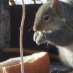 squirrel and bread