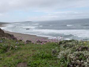 4-16-pca-ocean-beach-flowers