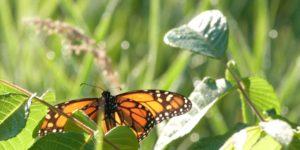 butterfly-7-12